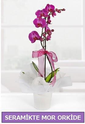 Seramik içerisinde birinci kalite tek dallı mor orkide  Düzce çiçekçiler