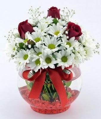 Fanusta 3 Gül ve Papatya  Düzce çiçek servisi , çiçekçi adresleri