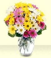 Düzce kaliteli taze ve ucuz çiçekler  mevsim çiçekleri mika yada cam vazo