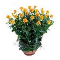 Düzce çiçek yolla , çiçek gönder , çiçekçi   10 adet sari gül tanzim cam yada mika vazoda çiçek