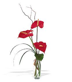 Düzce çiçek online çiçek siparişi  cam yada mika Vazoda 3 adet  antoryum