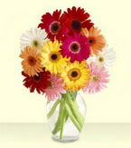 Düzce internetten çiçek satışı  cam yada mika vazoda 15 özel gerbera