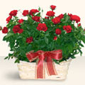 Düzce çiçekçiler  11 adet kirmizi gül sepette