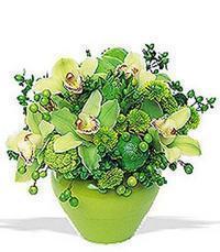 cam yada mika vazoda 5 adet orkide   Düzce çiçek siparişi sitesi
