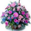 karisik mevsim kir çiçekleri  Düzce internetten çiçek siparişi