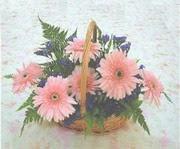 gerbera çiçeklerinde sepet   Düzce çiçek siparişi vermek