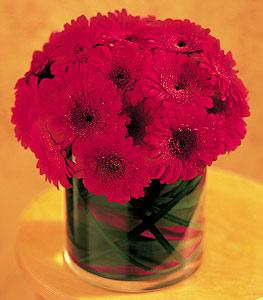 Düzce 14 şubat sevgililer günü çiçek  23 adet gerbera çiçegi sade ve sik cam içerisinde