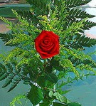 1 adet kirmizi gül buketi   Düzce güvenli kaliteli hızlı çiçek