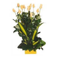 12 adet beyaz gül aranjmani  Düzce ucuz çiçek gönder