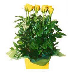 11 adet sari gül aranjmani  Düzce çiçek siparişi sitesi