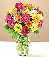 Düzce çiçekçi telefonları  17 adet karisik gerbera