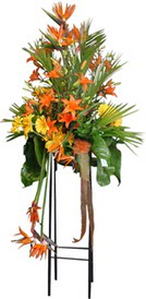Düzce çiçek online çiçek siparişi  perförje tanzimi dügün nikah ve açilislara