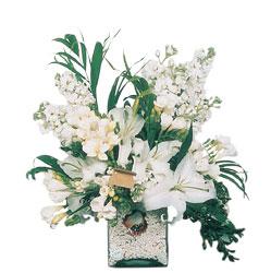 Düzce kaliteli taze ve ucuz çiçekler  sadece beyazlardan olusmus mevsim cam yada mika tanzim