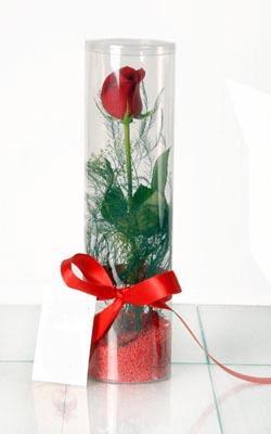 Düzce çiçek siparişi vermek  Silindir vazoda tek kirmizi gül