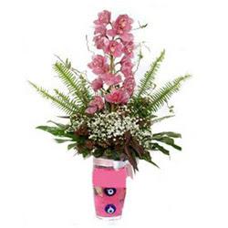 Düzce anneler günü çiçek yolla  cam yada mika vazo içerisinde tek dal orkide çiçegi
