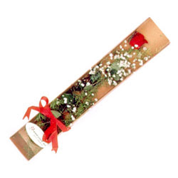 Düzce uluslararası çiçek gönderme  Kutuda tek 1 adet kirmizi gül çiçegi