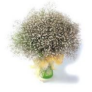 Düzce çiçek , çiçekçi , çiçekçilik  cam yada mika vazo içerisinde cipsofilya demeti