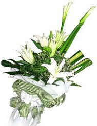 Düzce hediye çiçek yolla  3 dal kazablanka çiçegi ve yesillikler