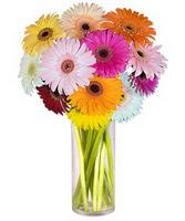 Düzce kaliteli taze ve ucuz çiçekler  Farkli renklerde 15 adet gerbera çiçegi