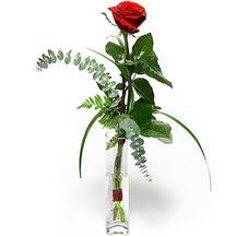 Düzce çiçek gönderme sitemiz güvenlidir  Sana deger veriyorum bir adet gül cam yada mika vazoda