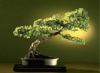 ithal bonsai saksi çiçegi  Düzce hediye sevgilime hediye çiçek