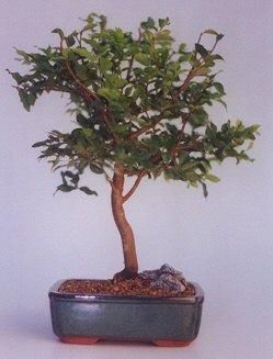 Düzce 14 şubat sevgililer günü çiçek  ithal bonsai saksi çiçegi  Düzce çiçek yolla