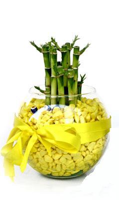 cam fanus içerisinde bambo  Düzce çiçek servisi , çiçekçi adresleri