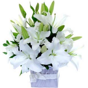 Düzce çiçek siparişi vermek  2 dal cazablanca vazo çiçeği