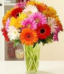 Düzce çiçek satışı  15 adet gerbera çiçek vazosu