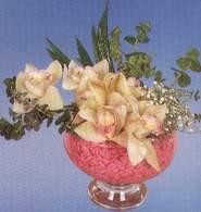 Düzce çiçek , çiçekçi , çiçekçilik  Dal orkide kalite bir hediye