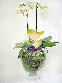 Düzce cicekciler , cicek siparisi  Cam yada mika vazoda özel orkideler