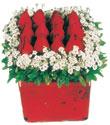 Düzce online çiçek gönderme sipariş  Kare cam yada mika içinde kirmizi güller - anneler günü seçimi özel çiçek