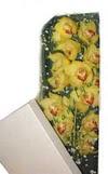 Düzce online çiçek gönderme sipariş  Kutu içerisine dal cymbidium orkide