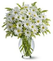 Vazo içerisinde beyaz krizantem çiçekleri  Düzce hediye sevgilime hediye çiçek
