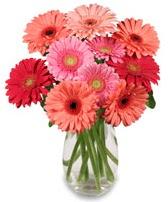 vazo içerisinde 13 adet gerbera çiçeği  Düzce çiçek online çiçek siparişi