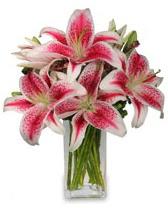 Vazo içerisinde 5 dal kazablanka çiçeği  Düzce çiçek yolla , çiçek gönder , çiçekçi