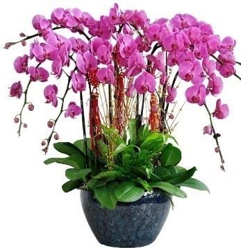 9 dallı mor orkide  Düzce çiçek gönderme sitemiz güvenlidir