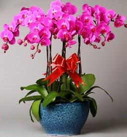 7 dallı mor orkide  Düzce çiçekçi telefonları