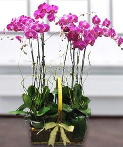4 dallı mor orkide  Düzce hediye çiçek yolla