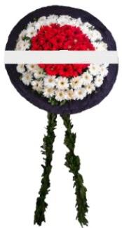 mozele çiçeği  Düzce çiçek gönderme