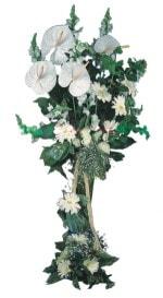 Düzce çiçek , çiçekçi , çiçekçilik  antoryumlarin büyüsü özel