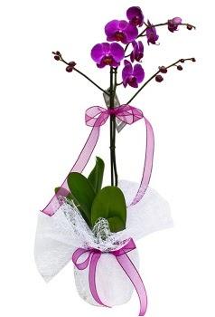 Tek dallı mor orkide  Düzce cicek , cicekci