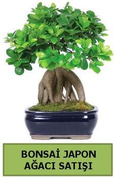 Bonsai japon ağacı satışı  Düzce cicekciler , cicek siparisi