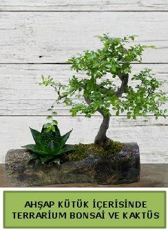 Ahşap kütük bonsai kaktüs teraryum  Düzce kaliteli taze ve ucuz çiçekler