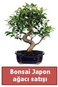 Japon ağacı bonsai satışı  Düzce çiçek online çiçek siparişi