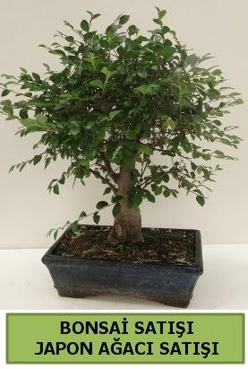 Minyatür bonsai japon ağacı satışı  Düzce internetten çiçek siparişi