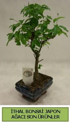 İthal bonsai japon ağacı bitkisi  Düzce çiçek gönderme