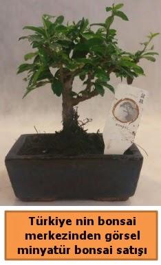 Japon ağacı bonsai satışı ithal görsel  Düzce çiçek siparişi vermek