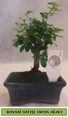 Minyatür bonsai ağacı satışı  Düzce online çiçek gönderme sipariş