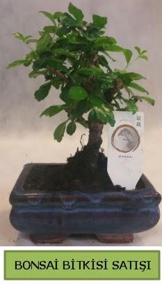 Bonsai ithal görsel minyatür japon ağacı  Düzce 14 şubat sevgililer günü çiçek